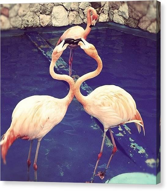 Flamingos Canvas Print - Pseudoheart #seaaquarium #animal by Jose Mata