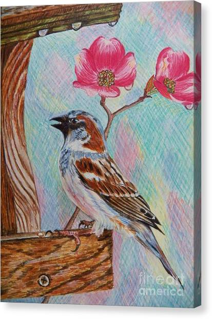 Ptg   Sparrow With Pink Dogwood In The Rain Canvas Print
