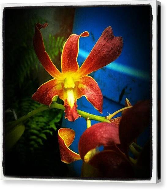 Orchids Canvas Print - #puertorico #april29 by Tania Torres