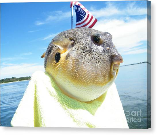 Puffer One Canvas Print by Laurence Oliver