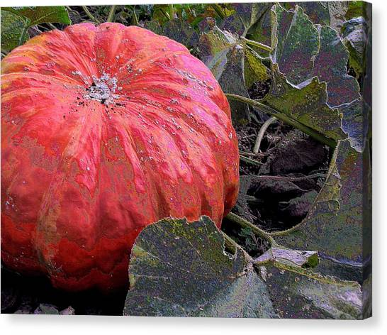 Pumpkin Harvest Canvas Print