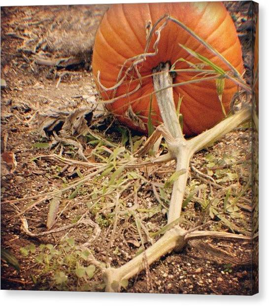 Pumpkins Canvas Print - Pumpkin by Joanna Boot