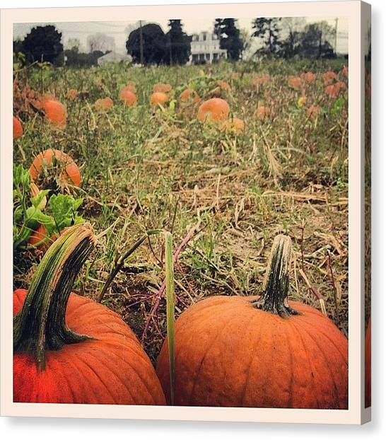 Pumpkins Canvas Print - Pumpkin by Julian Castillo