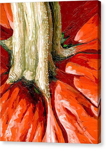 Pumpkin Stem Canvas Print