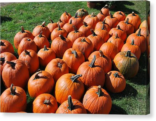 Pumpkins Galore Canvas Print