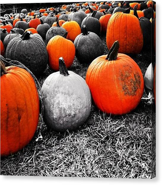 Ontario Canvas Print - #pumpkins #pumkpinpatch #colorsplash by Tanya B