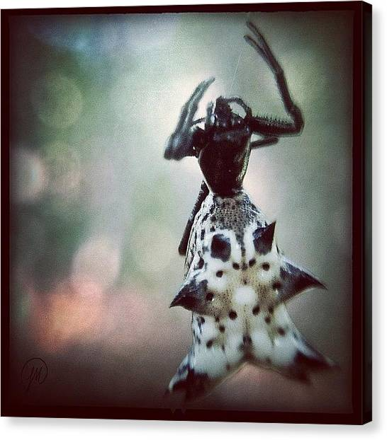 Georgia Canvas Print - Punk Rock Spider For #aa_arachnids And by Jenna Malloway