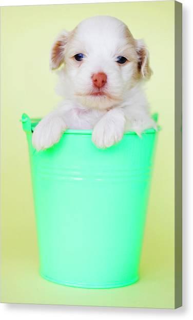 Puppy In Bucket Canvas Print