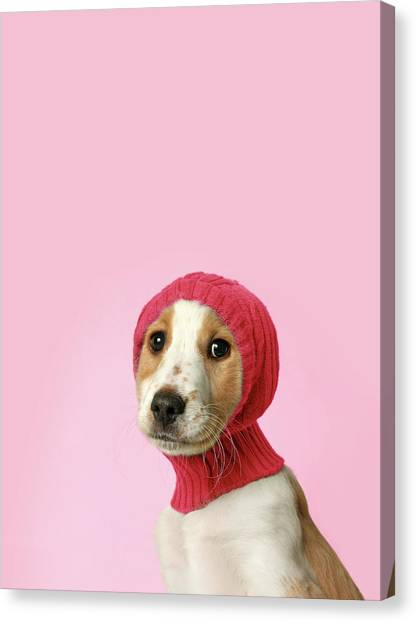 Cocker Spaniels Canvas Print - Puppy With Hat by Retales Botijero