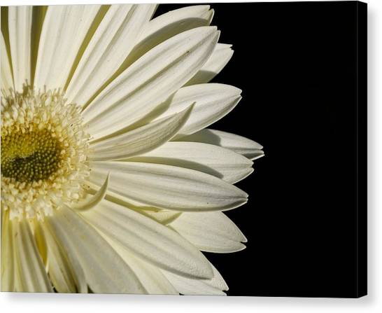 Purity Canvas Print by Jyotsna Chandra