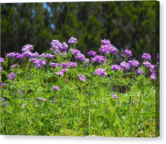 Purple And Green Canvas Print by Rebecca Cearley