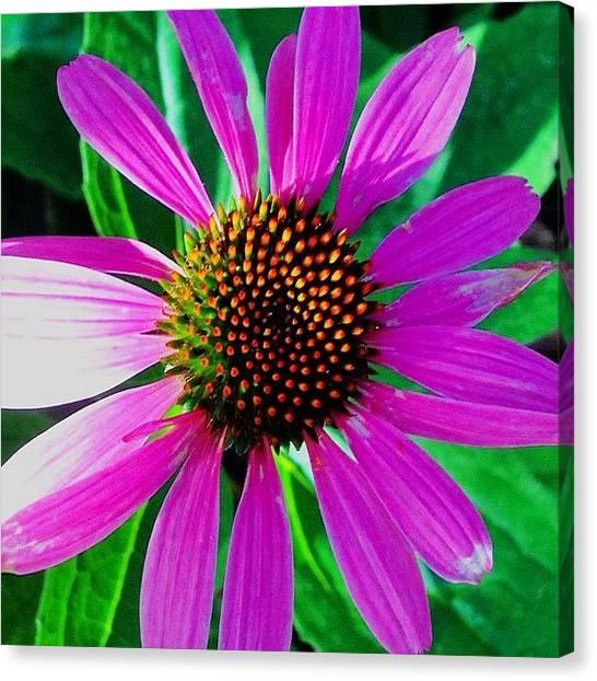 Floral Canvas Print - Purple Daisy Flower  by Irina Moskalev