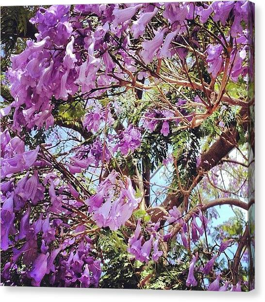 Fairies Canvas Print - #purple #flower #tree #jacaranda #june by Eva Martinez