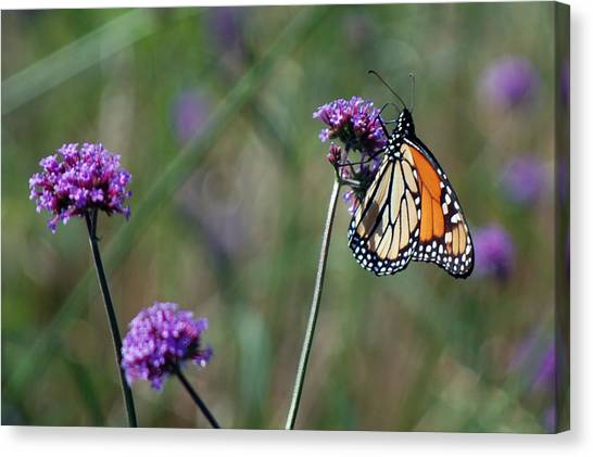 Purple Flower With Butterfly Canvas Print