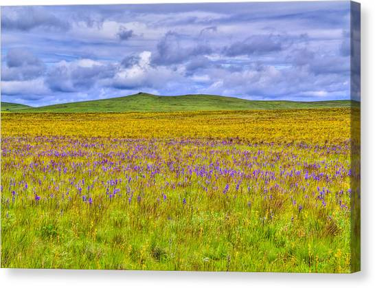 Purple Flowers On The Prairie Canvas Print by Jen TenBarge