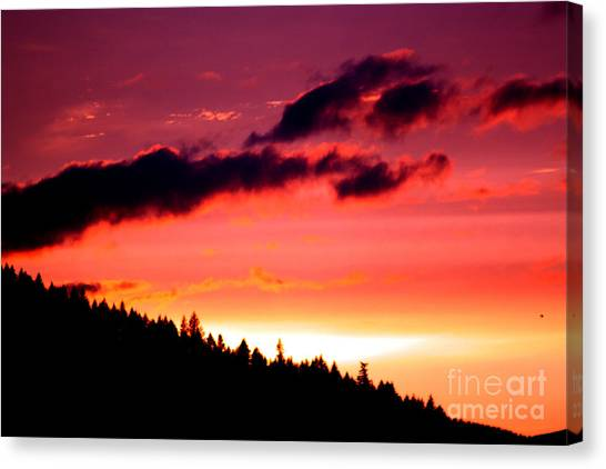 Purple Haze Canvas Print by Nick Gustafson