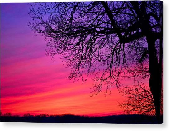 Purple Majesty Canvas Print by Brenda Becker