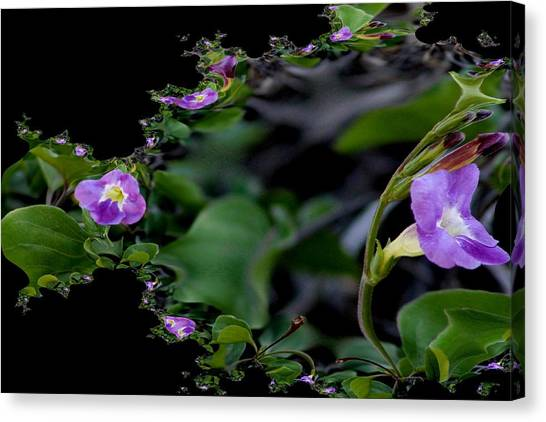 Purple Vitex 2 Canvas Print