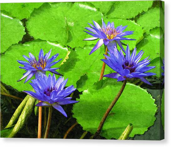 Purple Water Lilies Canvas Print by Design Windmill