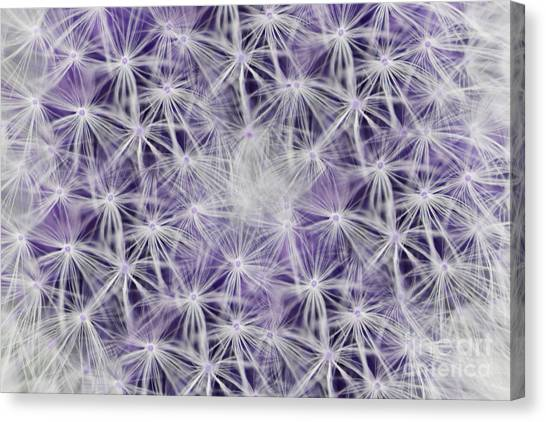 Purple Wishes Canvas Print