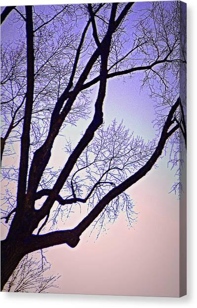 Purpler Branch Canvas Print by Dan Stone