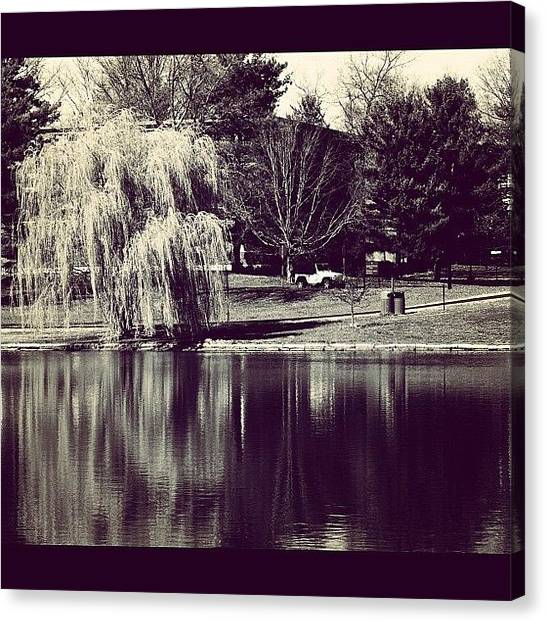 Jeep Canvas Print - #pussy #willow #tree #lake #pond #water by Brian Townsend