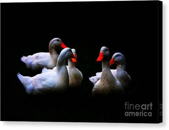 Quackery Quintet Canvas Print