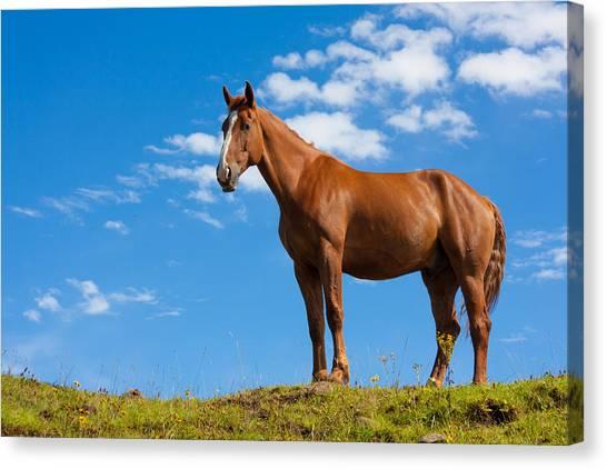 Red Dun Horse Canvas Print - Quarter Horse by Semmick Photo