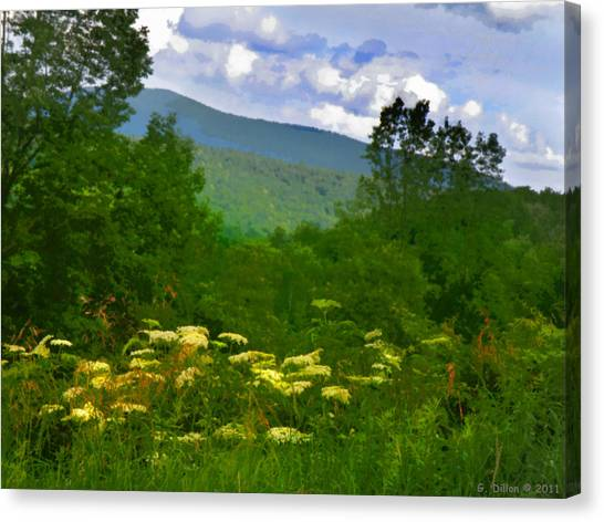 Queen Anne's Lace With A View Canvas Print
