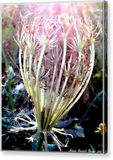 Queen Ann's Lace Sunny Glory Canvas Print