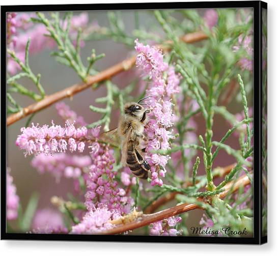 Queen Bee Canvas Print by Melisa Crook