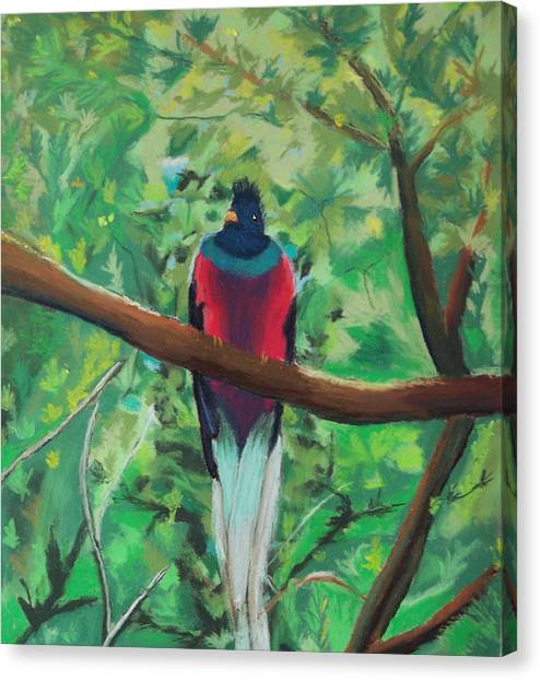 Quetzal In Costa Rica Canvas Print