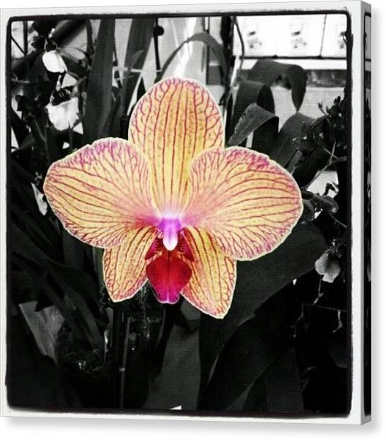 Orchids Canvas Print - Quien Me La Regala Pa' Las Madres :) by Tania Torres