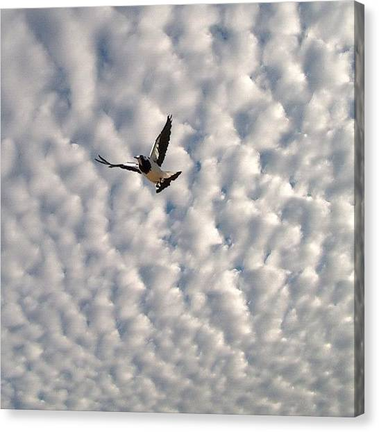 Flying Canvas Print - Quilted Sky by Cameron Bentley