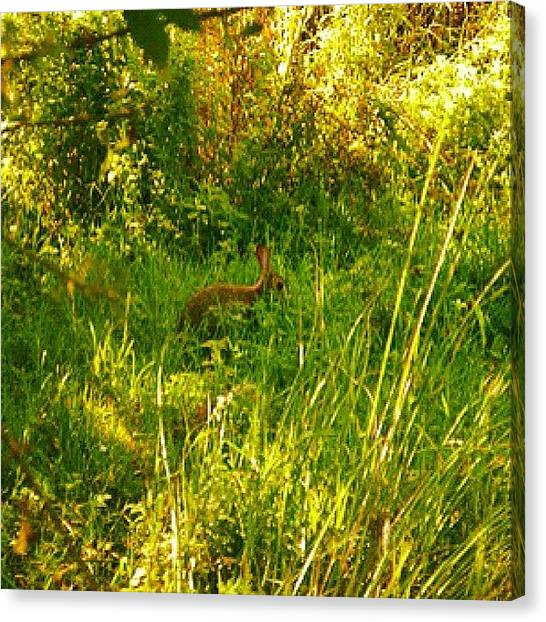 Rabbits Canvas Print - #rabbit #fluffy #green #grass #cute by Andy Johnson
