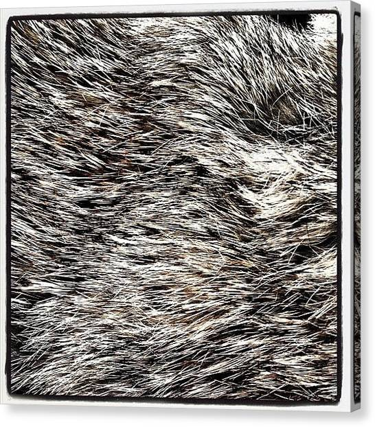 Rabbits Canvas Print - #rabbit #fur #soft #hairy #hat #warm by Charlie Smith