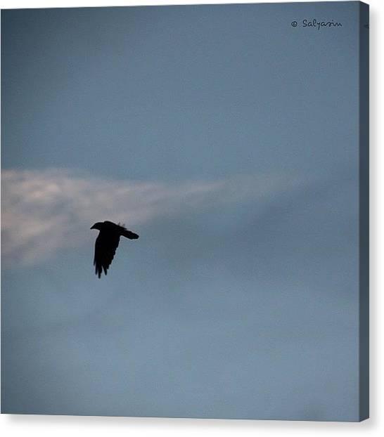 Ravens Canvas Print - #rabe Am Abendhimmel ~ #raven #bird by Sylvia Kepler-Albert