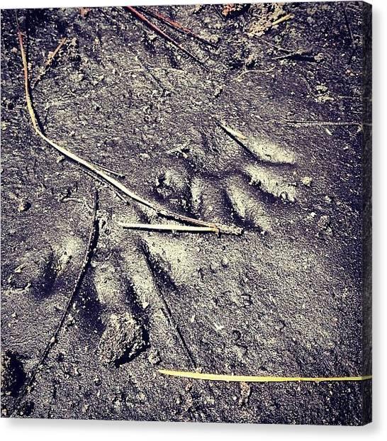 Raccoons Canvas Print - #raccoon #wildlife #florida by Kyle Kazoo