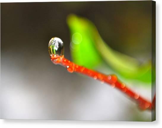 rain drops Tiny Wonder Canvas Print by Gloria Warren