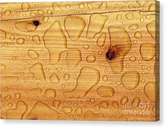 Rain On Wood Canvas Print