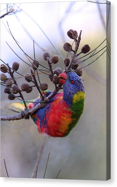 Rainbow At Play Canvas Print