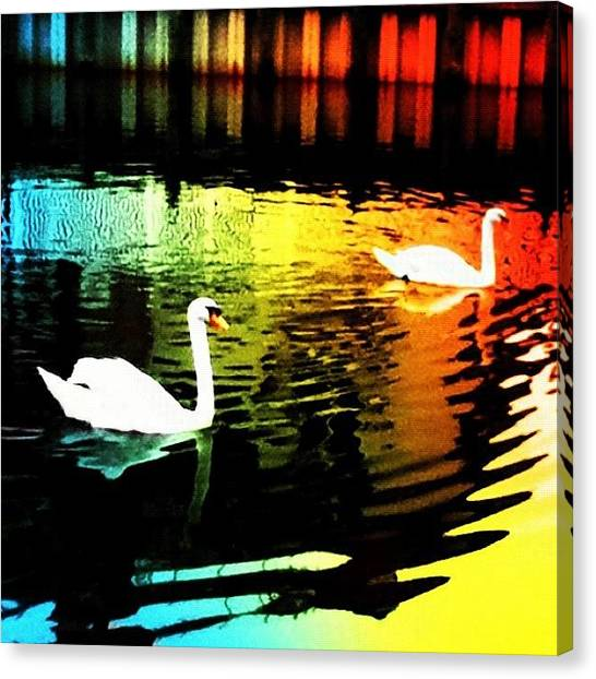 Swans Canvas Print - Rainbow Water Way by Kayla Mitchell