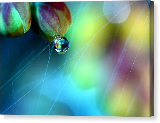 Spider Web Canvas Print - Rainbow Web by Sharon Johnstone