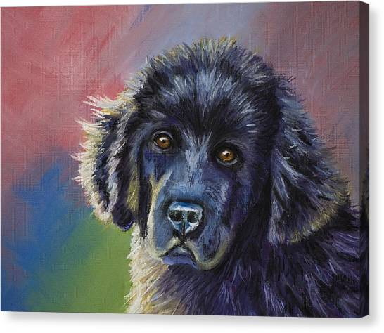 Rainbows And Sunshine - Newfoundland Puppy Canvas Print