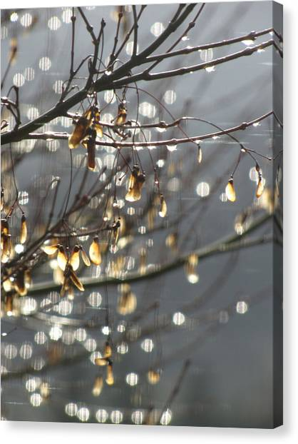 Raindrops And Leaves Canvas Print