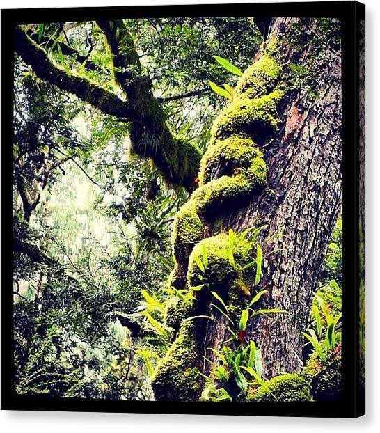 Rainforests Canvas Print - Rainforest In Oz by Brent Dunn