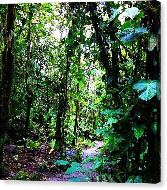 Rainforests Canvas Print - #rainforest #iphoneography #picoftheday by Martin Endara