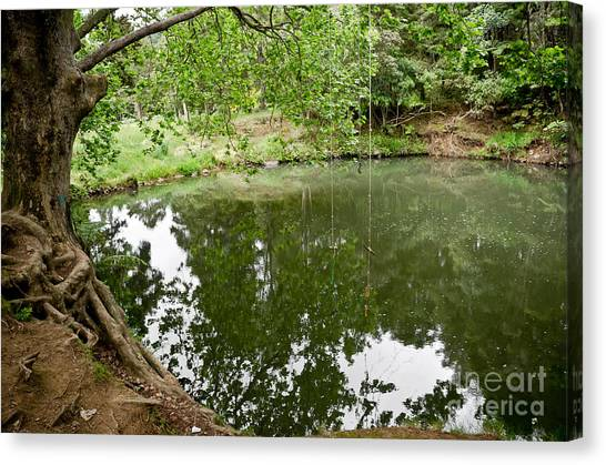 Rainforest Lake In New Zealand Canvas Print