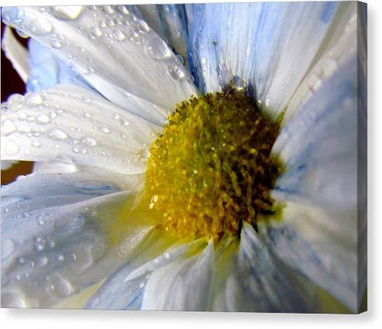Rainy Daisy Canvas Print