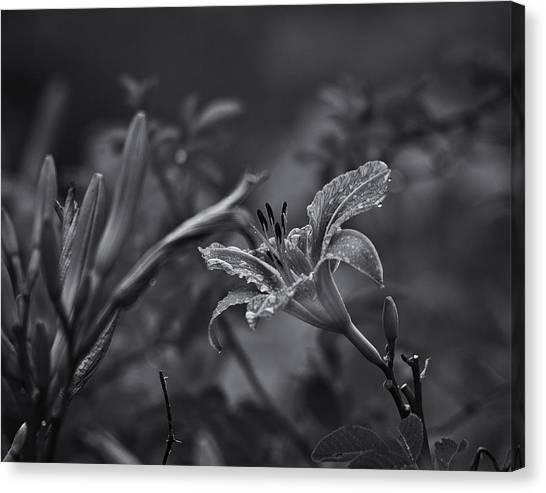 Daylily Canvas Print - Rainy Day Lily by Susan Capuano
